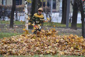 Активно поддерживают регулярную уборку опавших листьев жители сразу двух дворов из района Москворечье-Сабурово. Фото: «Вечерняя Москва»
