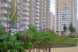 Новые деревья высадили в районе. Фото: Анна Быкова