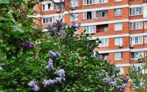 В Москве на кадастровый учет поставлено 49 домов по реновации. Фото: архив, «Вечерняя Москва»