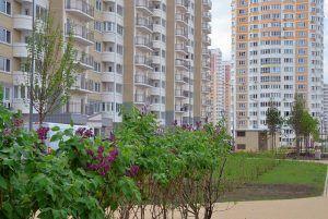 Около 270 кустарников высадят на одной из улиц района. Фото: Анна Быкова
