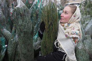 Пункты приема елей на утилизацию открыты в районе. Фото: Антон Гердо, «Вечерняя Москва»