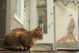 Благотворительный фестиваль для любителей животных пройдет в столице. Фото: Наталья Нечаева, «Вечерняя Москва»