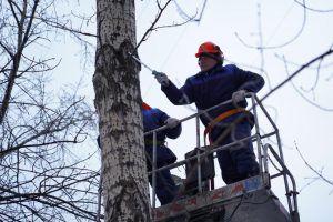 Деревья кронировали в Карманицком переулке. Фото: Денис Кондратьев