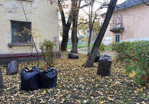 Работники «Жилищника» организуют сбор опавшей листвы в районе. Фото: Анна Быкова